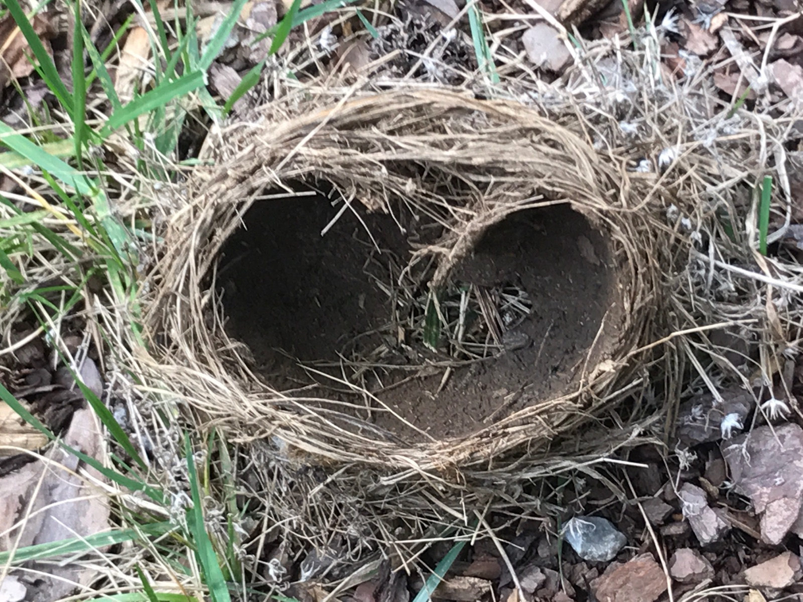 Mother's Day with an Empty Nest
