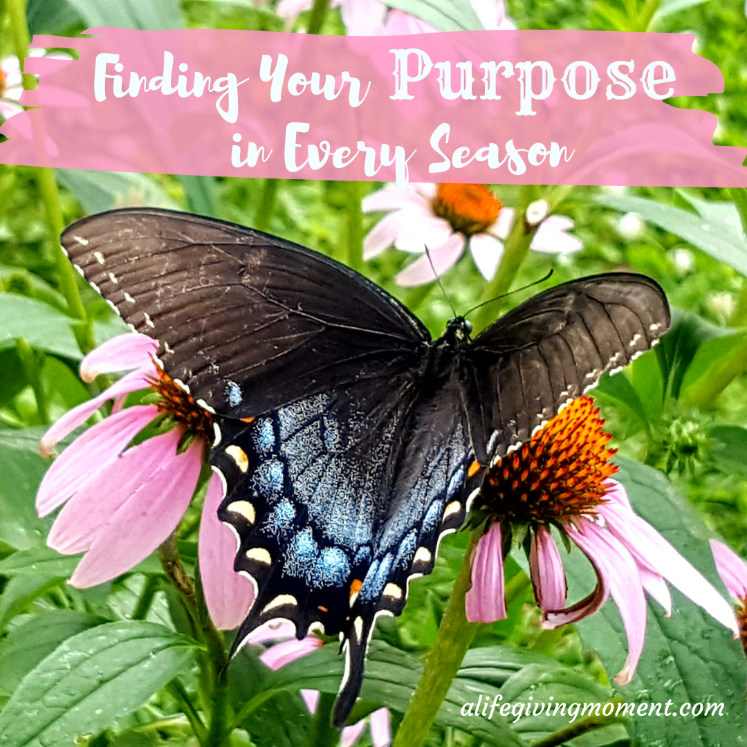 Finding Your Purpose in Every Season